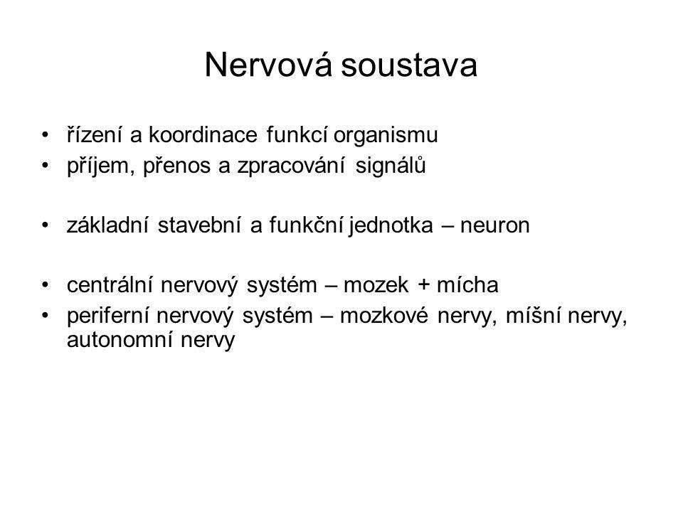 Nervová soustava řízení a koordinace funkcí organismu