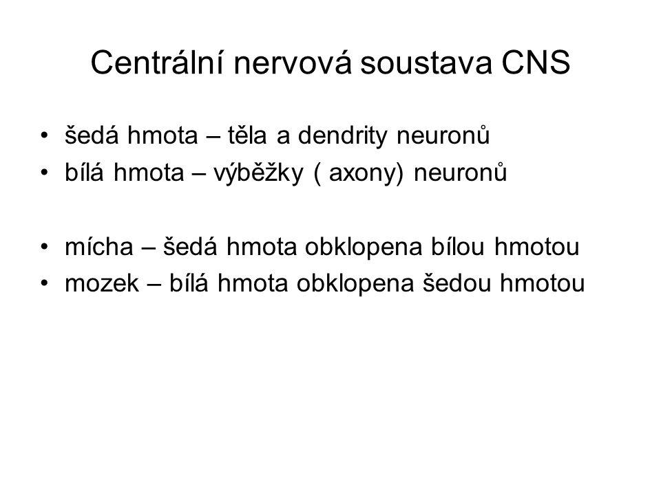 Centrální nervová soustava CNS