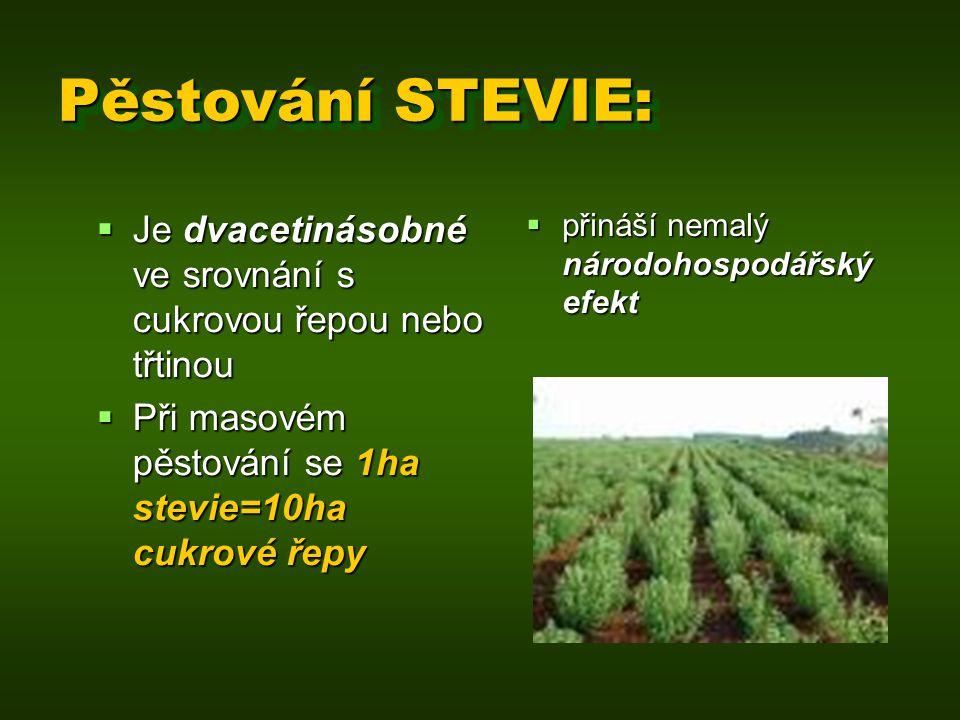 Pěstování STEVIE: Je dvacetinásobné ve srovnání s cukrovou řepou nebo třtinou. Při masovém pěstování se 1ha stevie=10ha cukrové řepy.