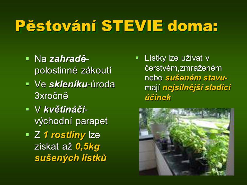 Pěstování STEVIE doma: