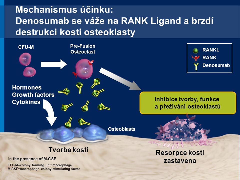 Mechanismus účinku: Denosumab se váže na RANK Ligand a brzdí destrukci kosti osteoklasty