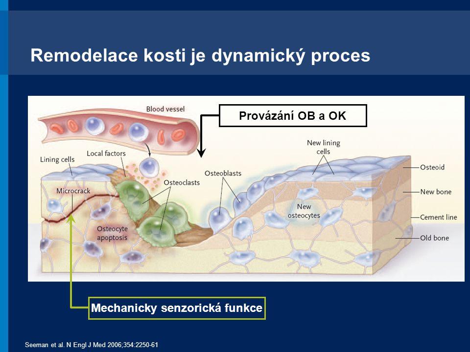 Remodelace kosti je dynamický proces