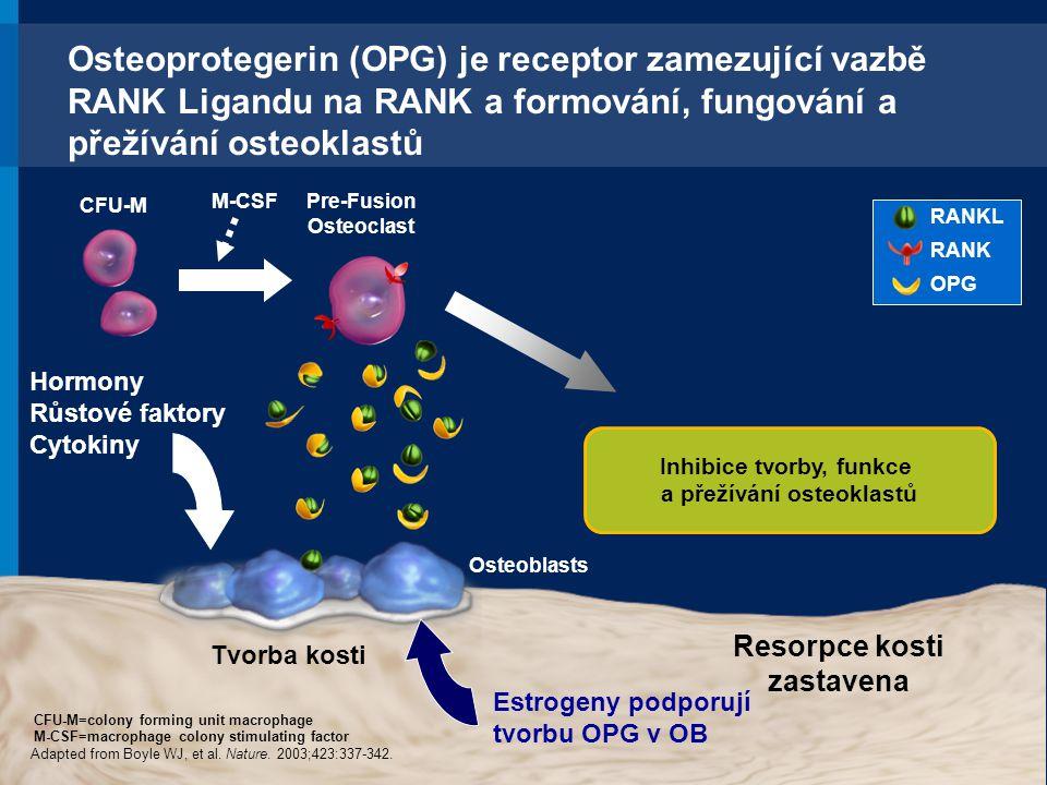 Osteoprotegerin (OPG) je receptor zamezující vazbě RANK Ligandu na RANK a formování, fungování a přežívání osteoklastů