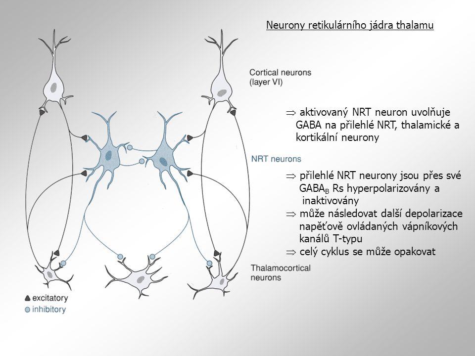 Neurony retikulárního jádra thalamu
