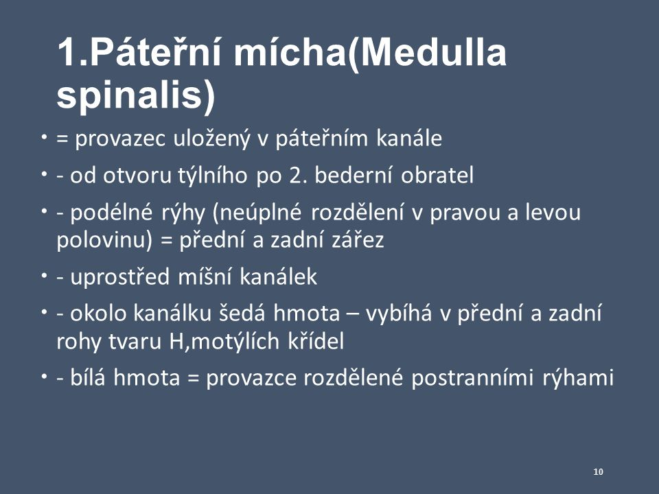 1.Páteřní mícha(Medulla spinalis)