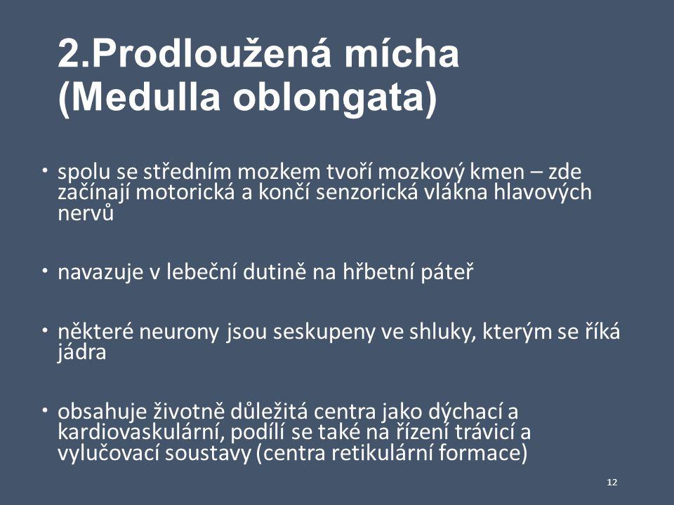 2.Prodloužená mícha (Medulla oblongata)
