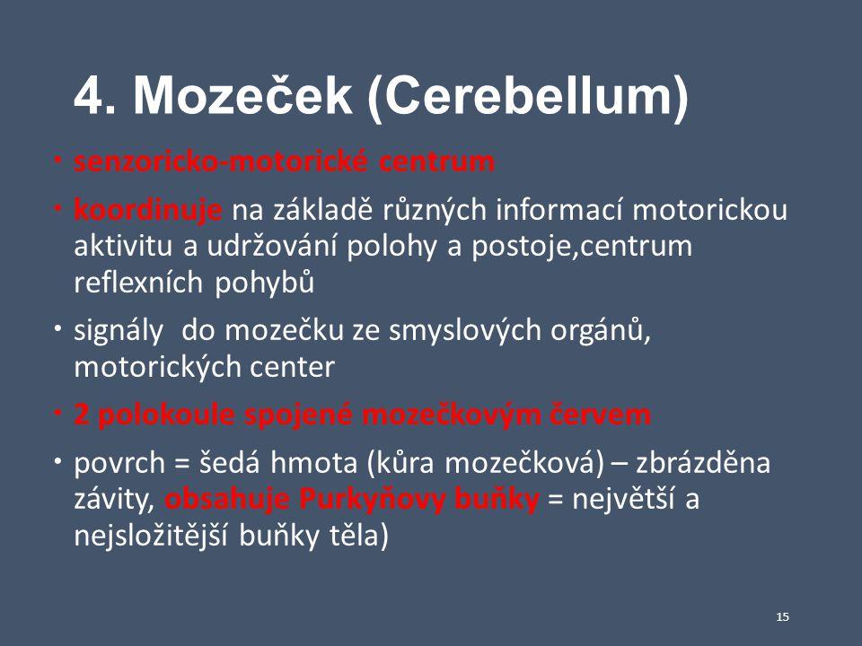 4. Mozeček (Cerebellum) senzoricko-motorické centrum