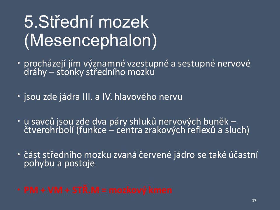 5.Střední mozek (Mesencephalon)