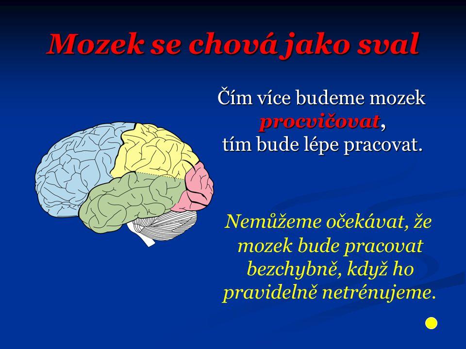 Mozek se chová jako sval