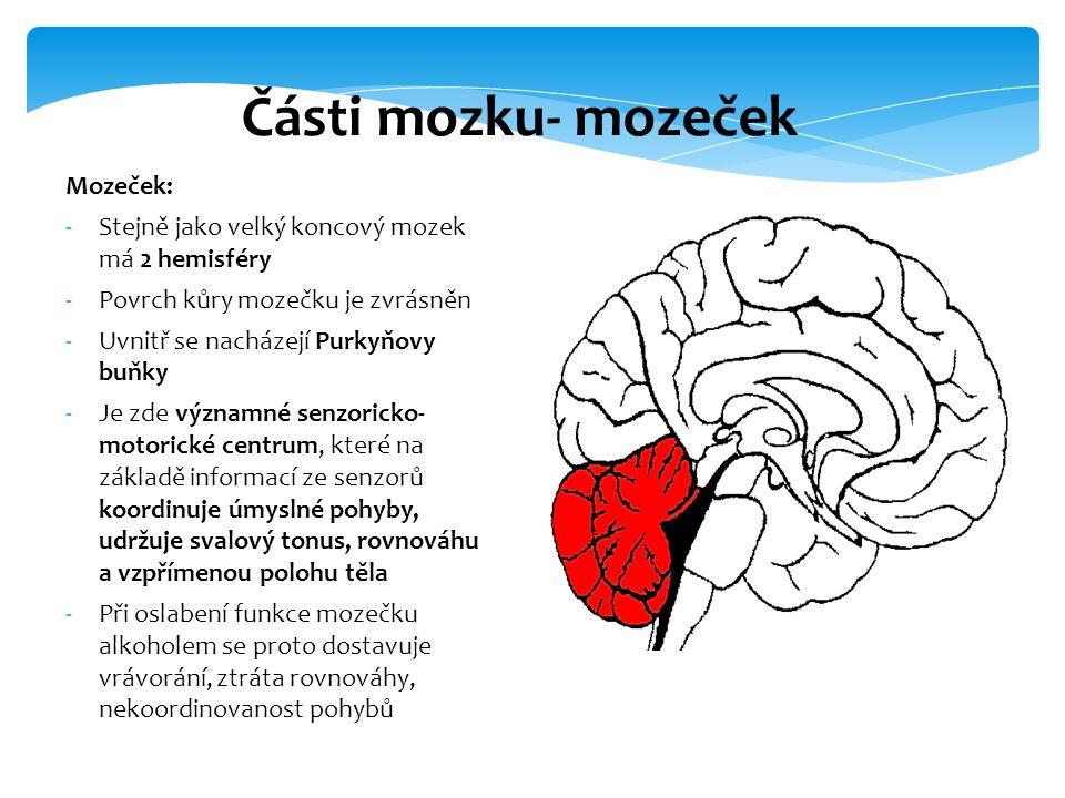 Části mozku- mozeček Mozeček: