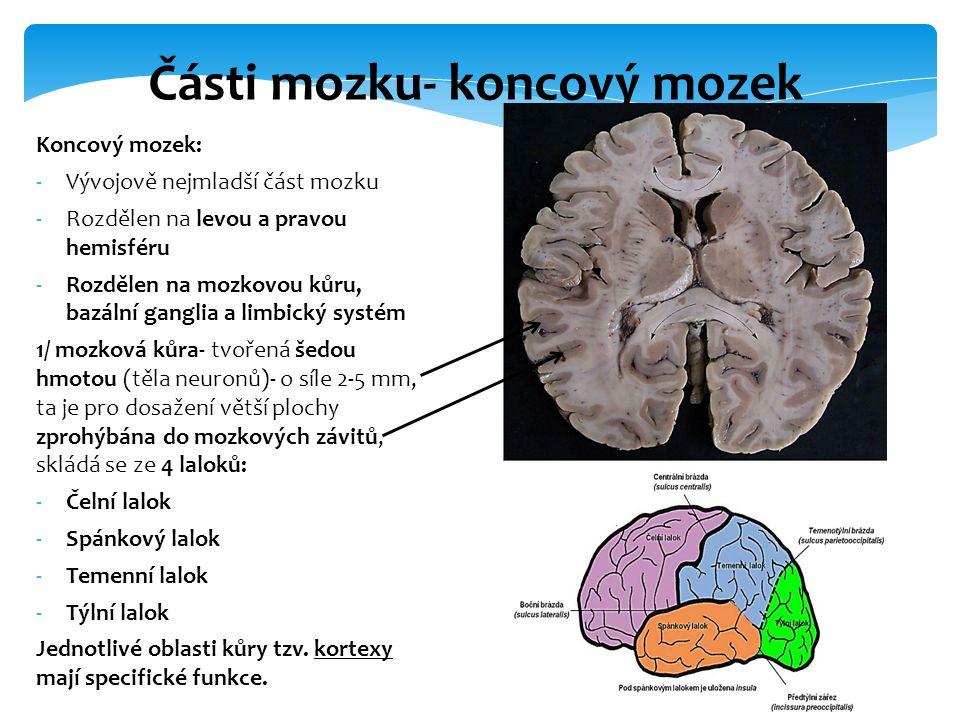 Části mozku- koncový mozek