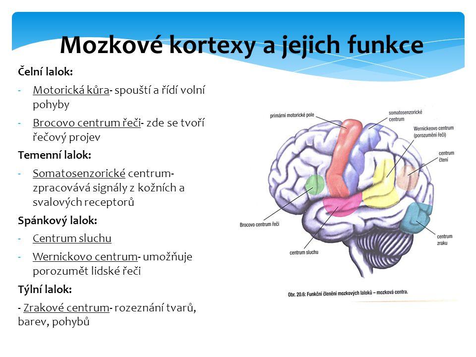 Mozkové kortexy a jejich funkce