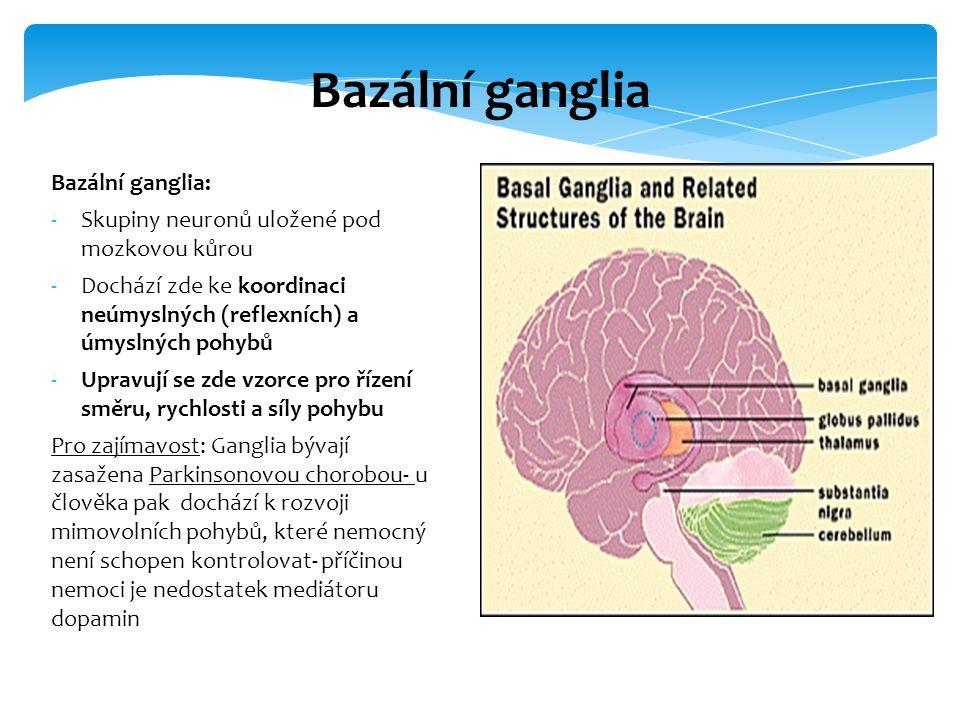 Bazální ganglia Bazální ganglia: