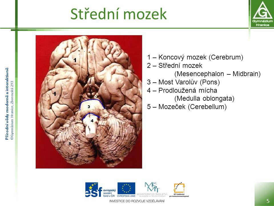 Střední mozek 1 – Koncový mozek (Cerebrum)