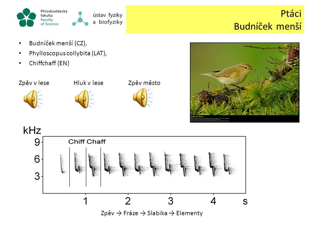 Ptáci Budníček menší Budníček menší (CZ),