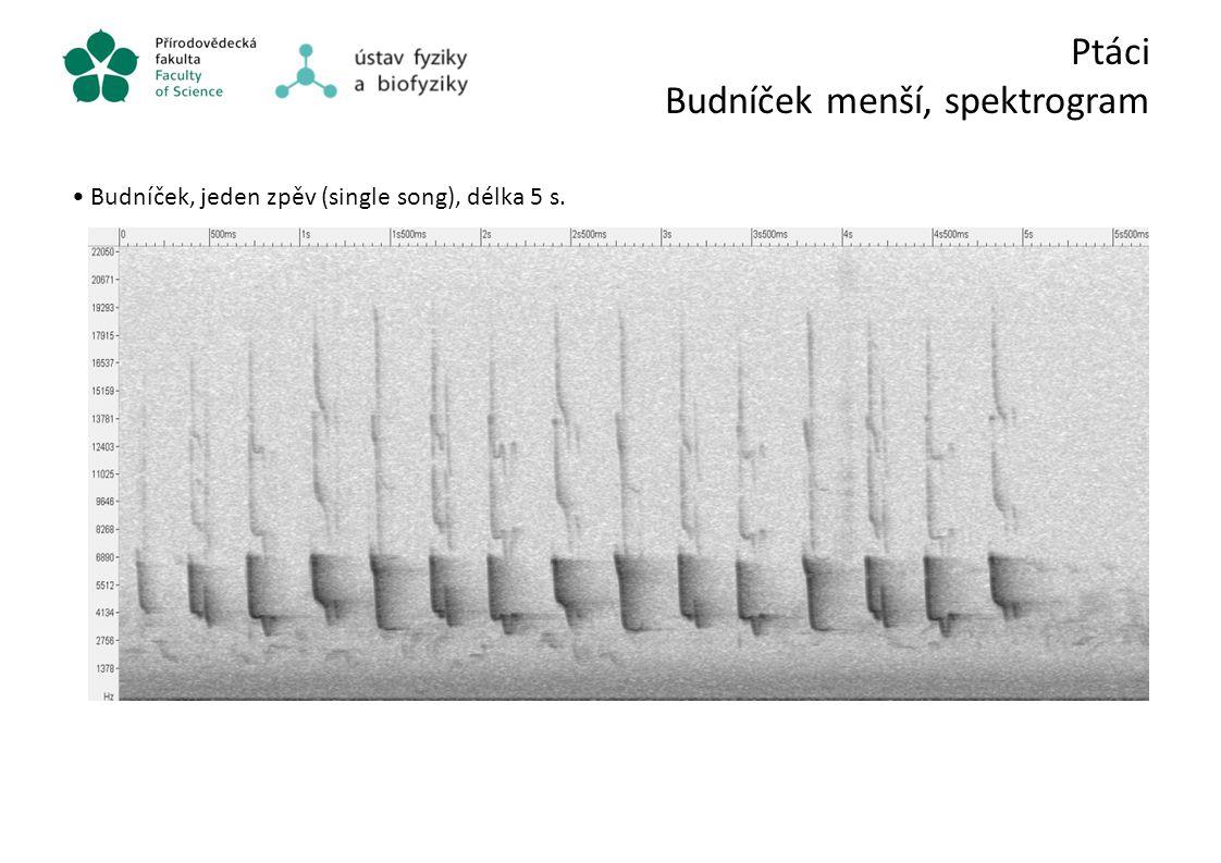 Ptáci Budníček menší, spektrogram