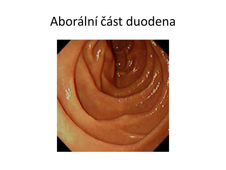 Aborální část duodena