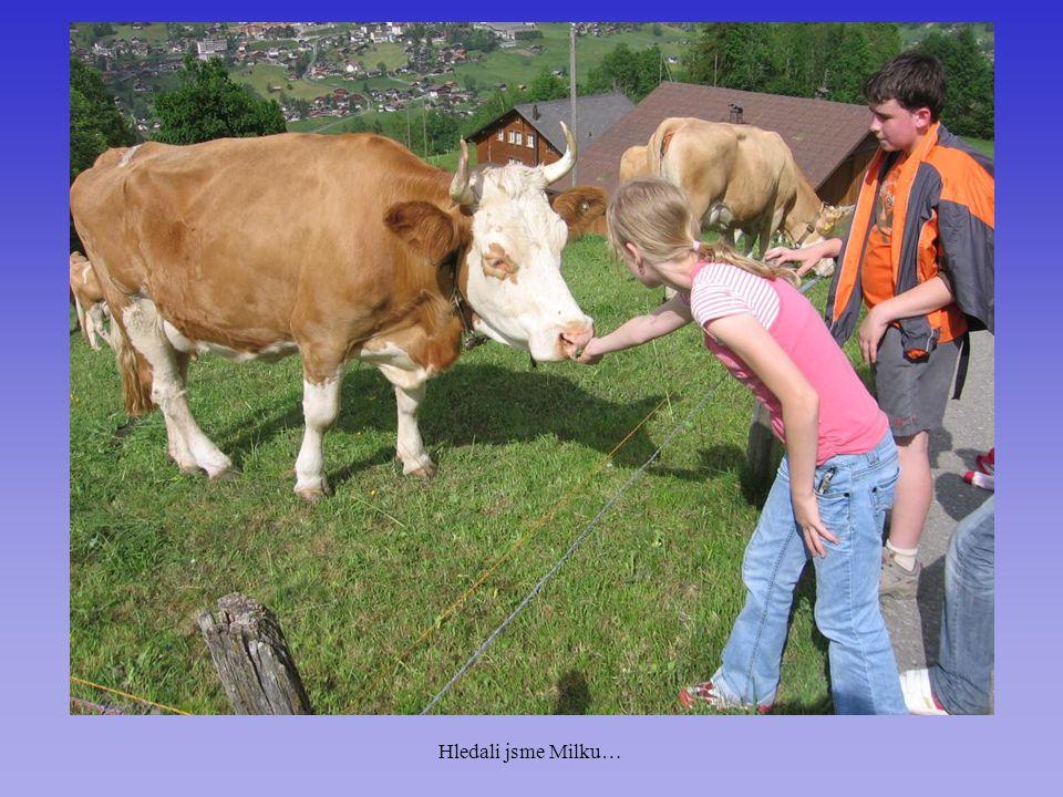 Hledali jsme Milku…