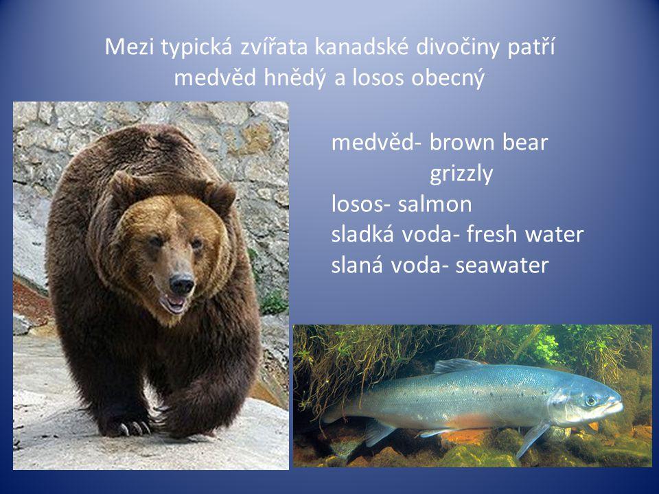 Mezi typická zvířata kanadské divočiny patří medvěd hnědý a losos obecný