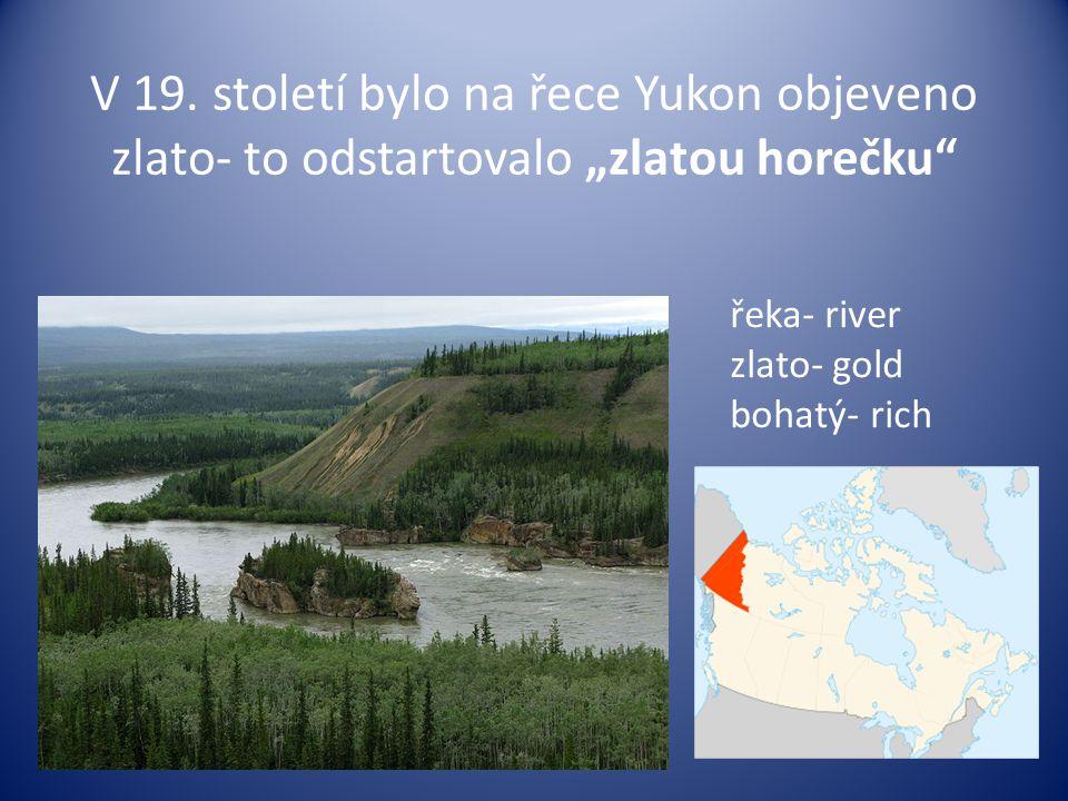 """V 19. století bylo na řece Yukon objeveno zlato- to odstartovalo """"zlatou horečku"""