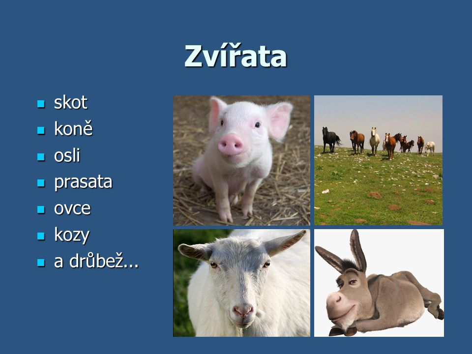 Zvířata skot koně osli prasata ovce kozy a drůbež...