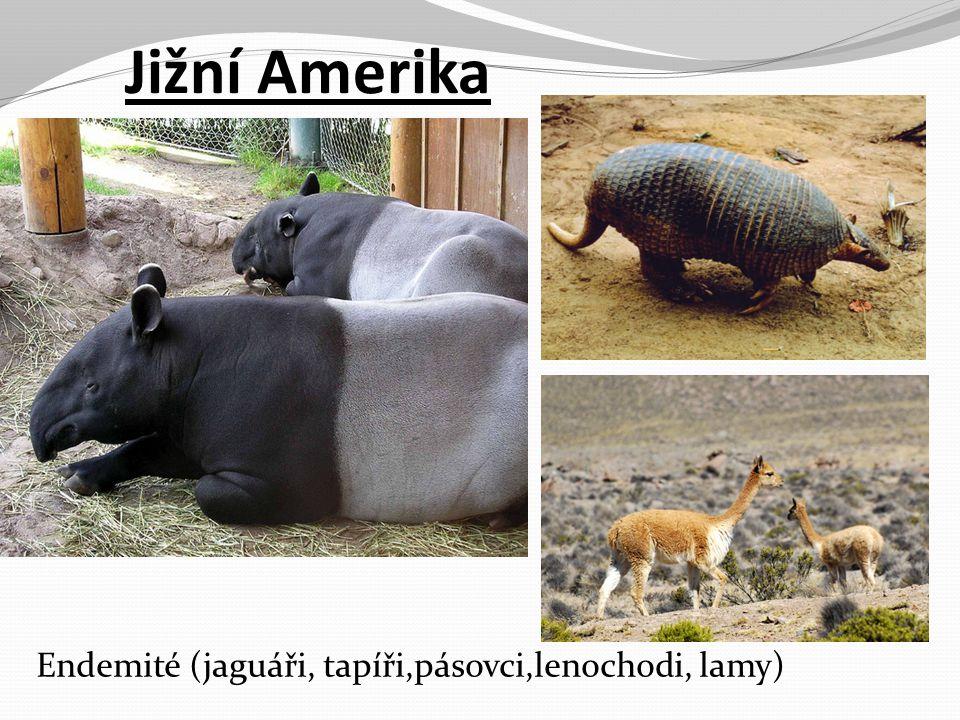 Jižní Amerika Endemité (jaguáři, tapíři,pásovci,lenochodi, lamy)