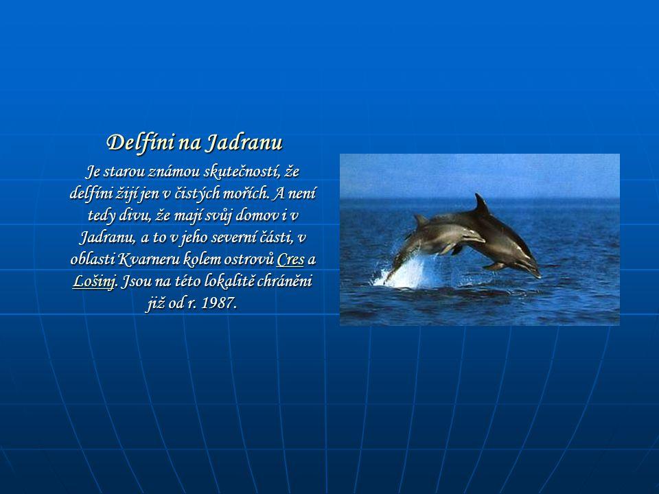 Delfíni na Jadranu