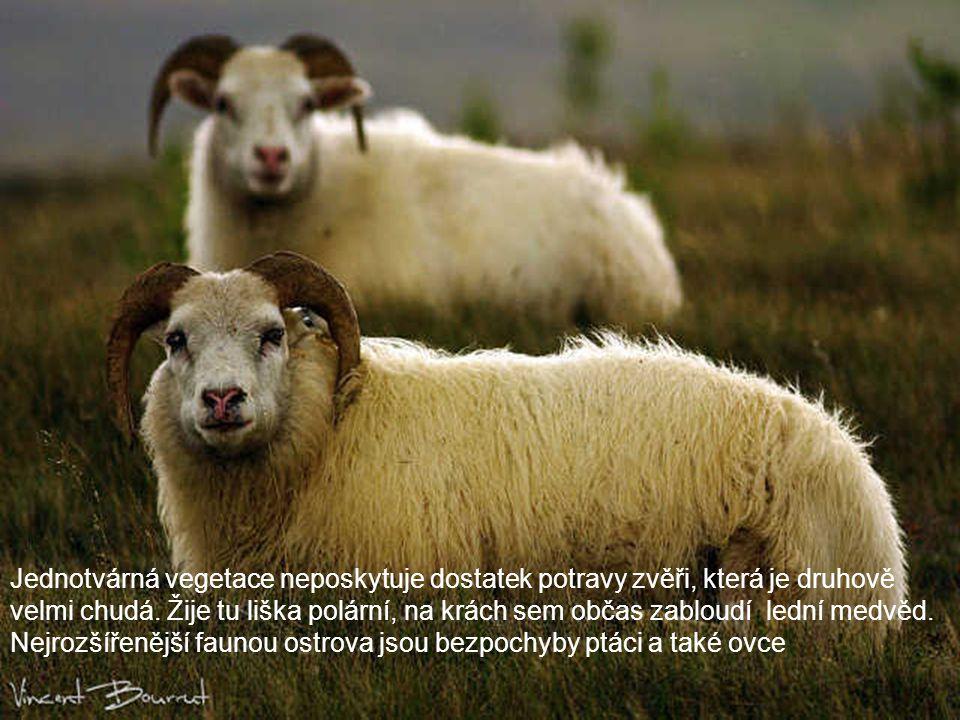 Jednotvárná vegetace neposkytuje dostatek potravy zvěři, která je druhově velmi chudá.
