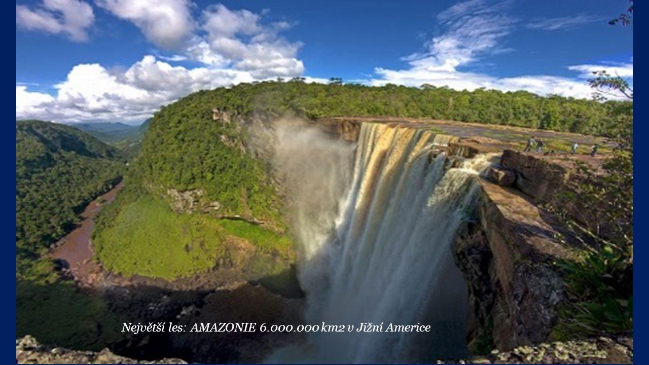 Největší les: AMAZONIE 6.000.000 km2 v Jižní Americe