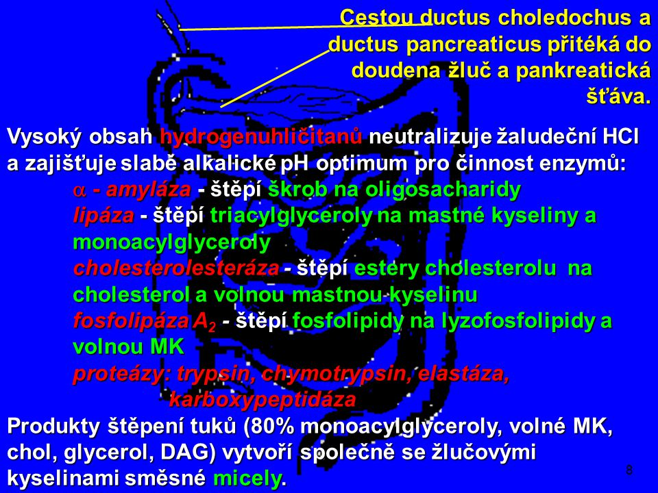 a - amyláza - štěpí škrob na oligosacharidy
