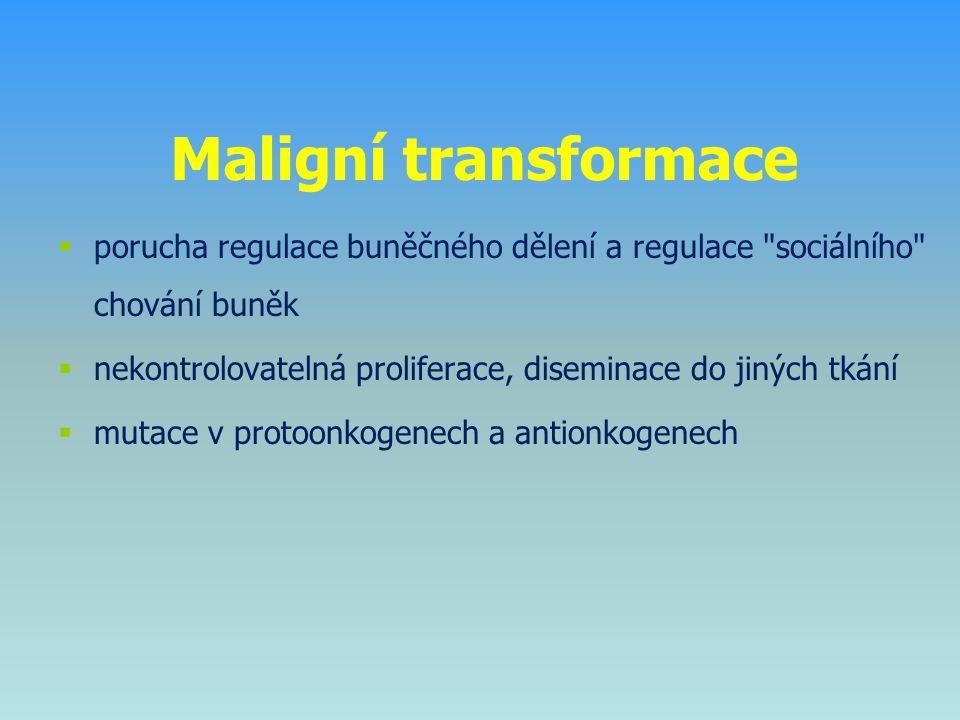 Maligní transformace porucha regulace buněčného dělení a regulace sociálního chování buněk.