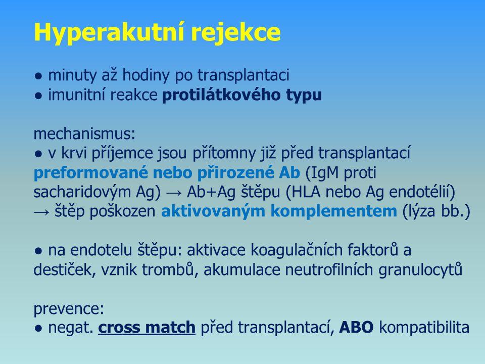 Hyperakutní rejekce ● minuty až hodiny po transplantaci ● imunitní reakce protilátkového typu mechanismus: ● v krvi příjemce jsou přítomny již před transplantací preformované nebo přirozené Ab (IgM proti sacharidovým Ag) → Ab+Ag štěpu (HLA nebo Ag endotélií) → štěp poškozen aktivovaným komplementem (lýza bb.) ● na endotelu štěpu: aktivace koagulačních faktorů a destiček, vznik trombů, akumulace neutrofilních granulocytů prevence: ● negat.