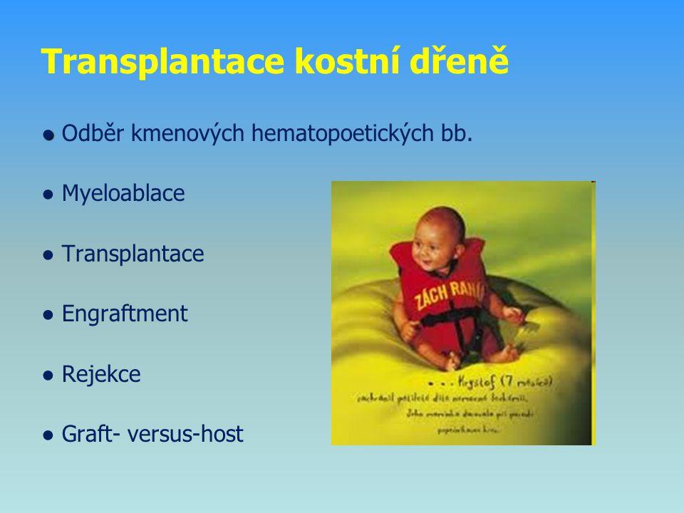 Transplantace kostní dřeně