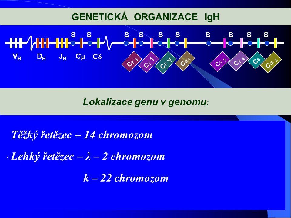 GENETICKÁ ORGANIZACE IgH