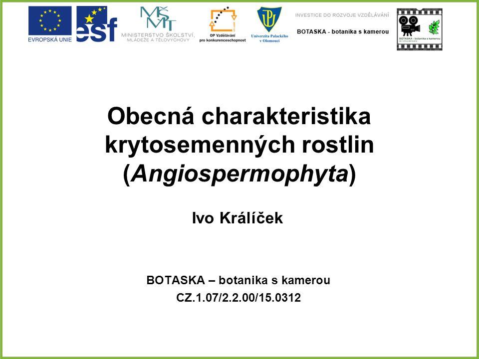 Obecná charakteristika krytosemenných rostlin (Angiospermophyta)