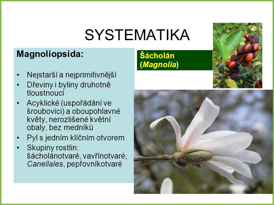 SYSTEMATIKA Magnoliopsida: Šácholán (Magnolia)