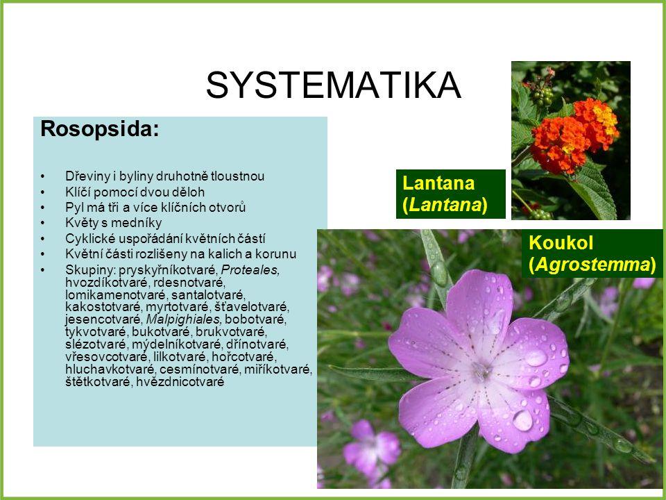 SYSTEMATIKA Rosopsida: Lantana (Lantana) Koukol (Agrostemma)