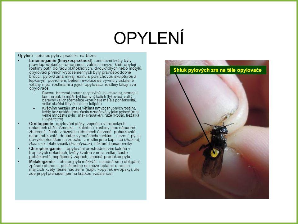 OPYLENÍ Shluk pylových zrn na těle opylovače