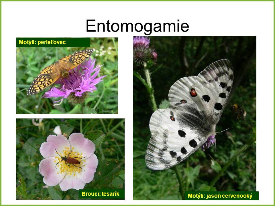Entomogamie Motýli: perleťovec Brouci: tesařík