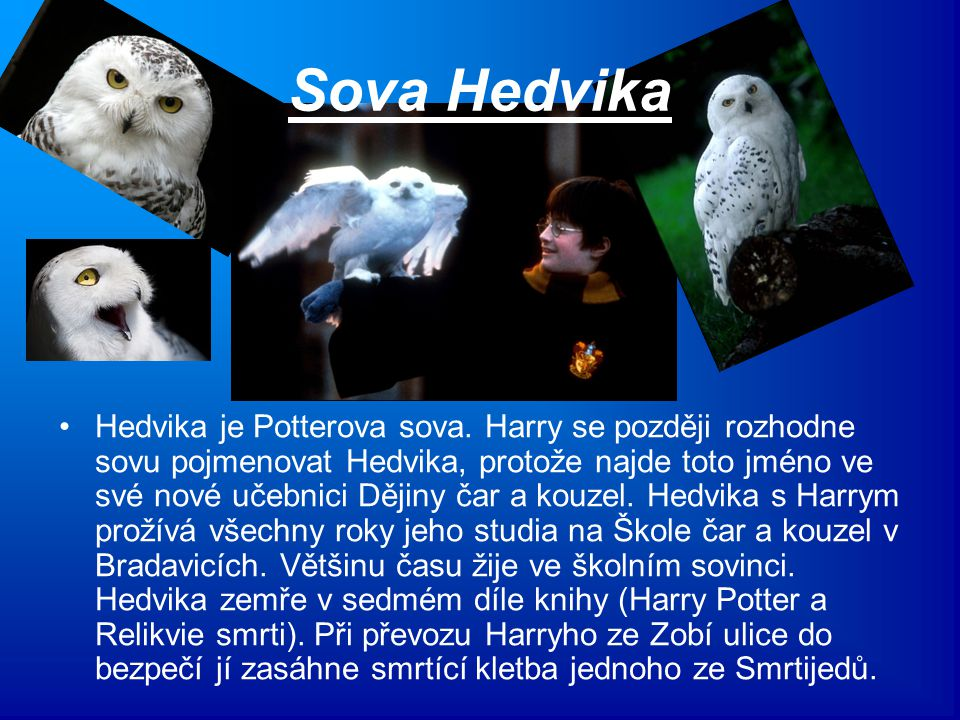 Sova Hedvika