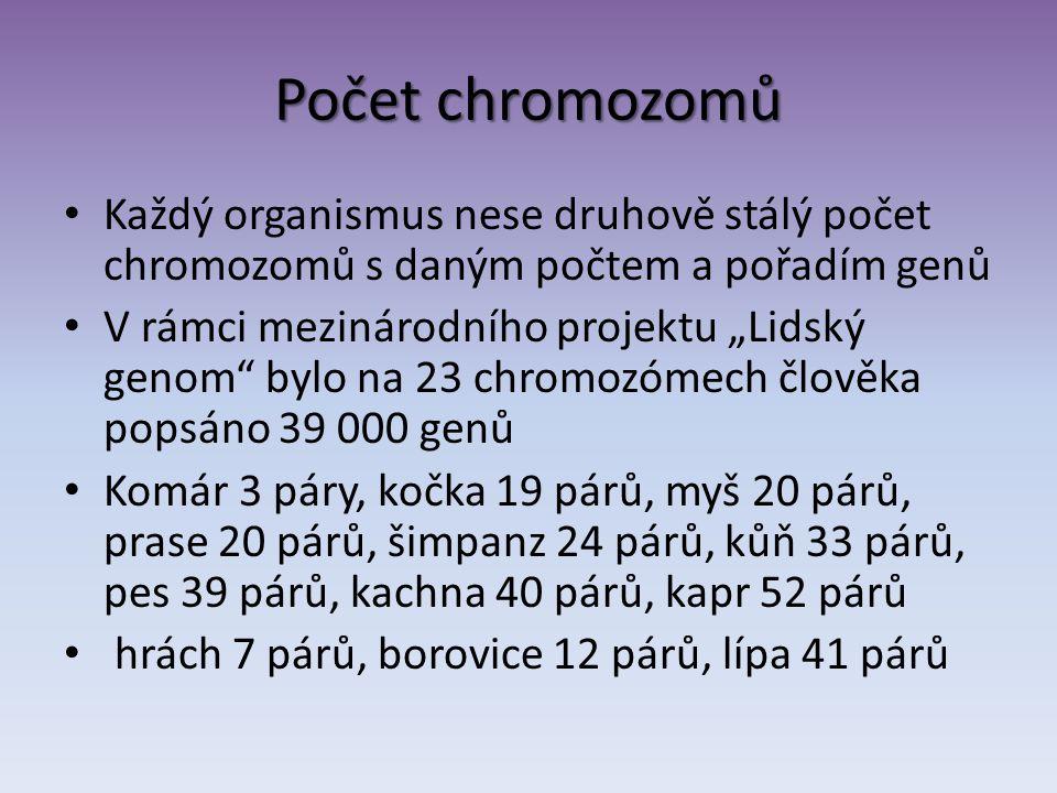 Počet chromozomů Každý organismus nese druhově stálý počet chromozomů s daným počtem a pořadím genů.