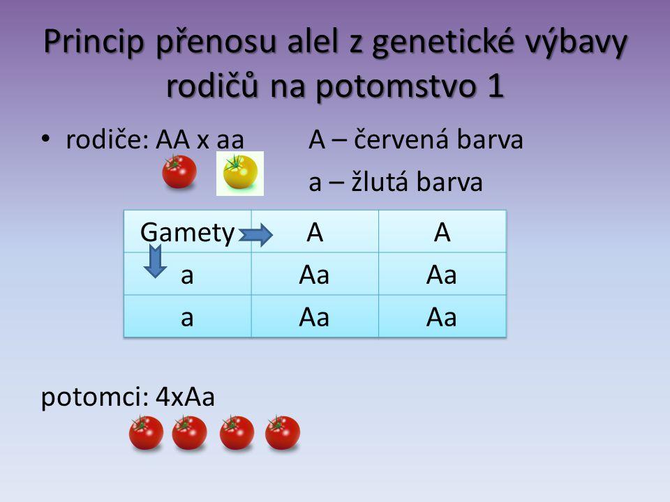 Princip přenosu alel z genetické výbavy rodičů na potomstvo 1