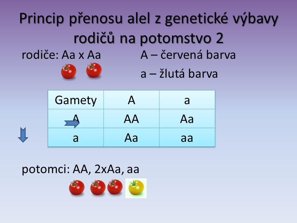 Princip přenosu alel z genetické výbavy rodičů na potomstvo 2