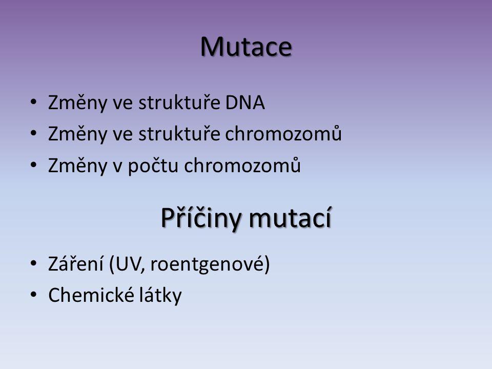Mutace Příčiny mutací Změny ve struktuře DNA