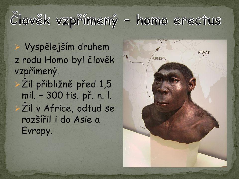 Člověk vzpřímený – homo erectus