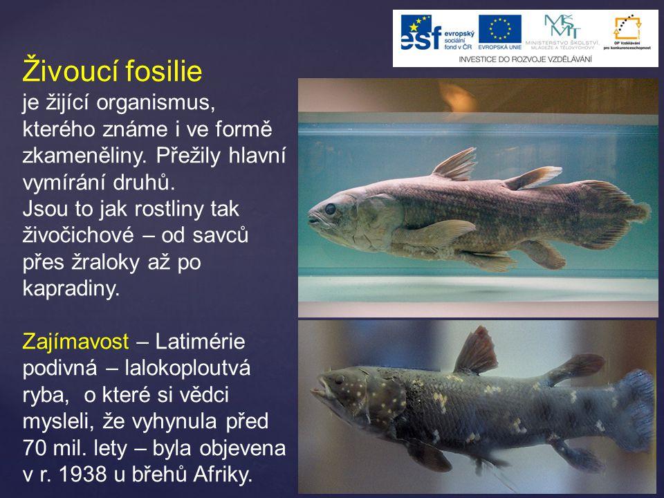 Živoucí fosilie je žijící organismus, kterého známe i ve formě zkameněliny. Přežily hlavní vymírání druhů.