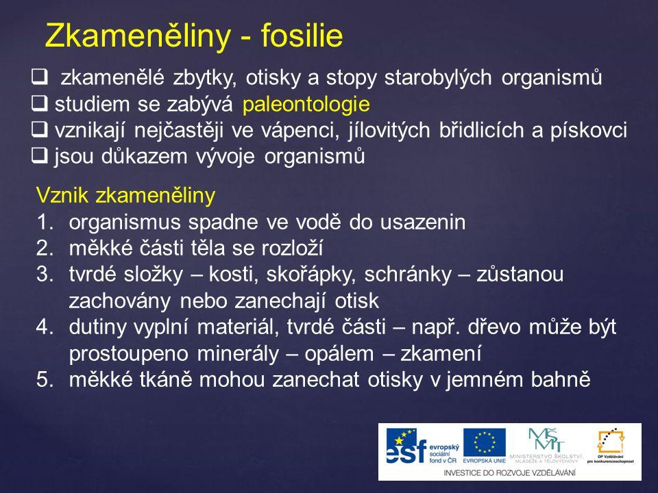 Zkameněliny - fosilie zkamenělé zbytky, otisky a stopy starobylých organismů. studiem se zabývá paleontologie.