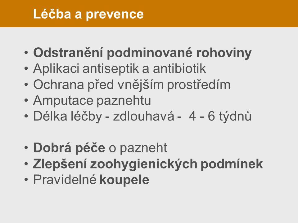 Léčba a prevence Odstranění podminované rohoviny. Aplikaci antiseptik a antibiotik. Ochrana před vnějším prostředím.