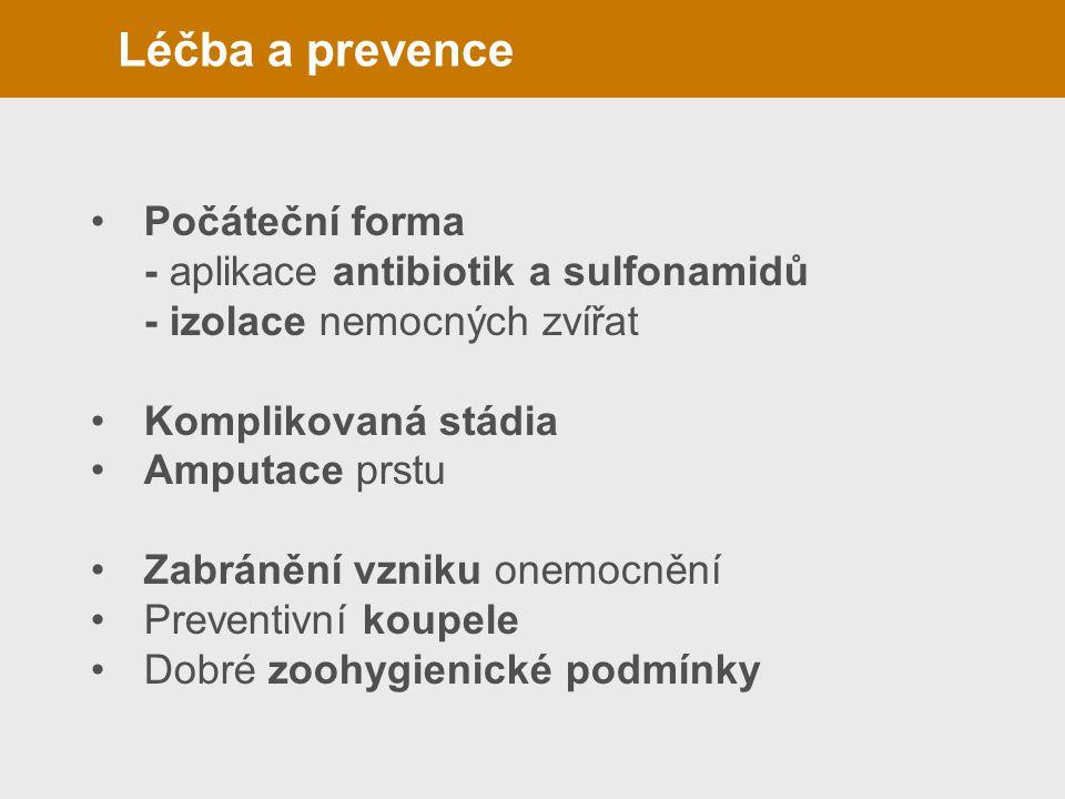 Léčba a prevence(panaritium)