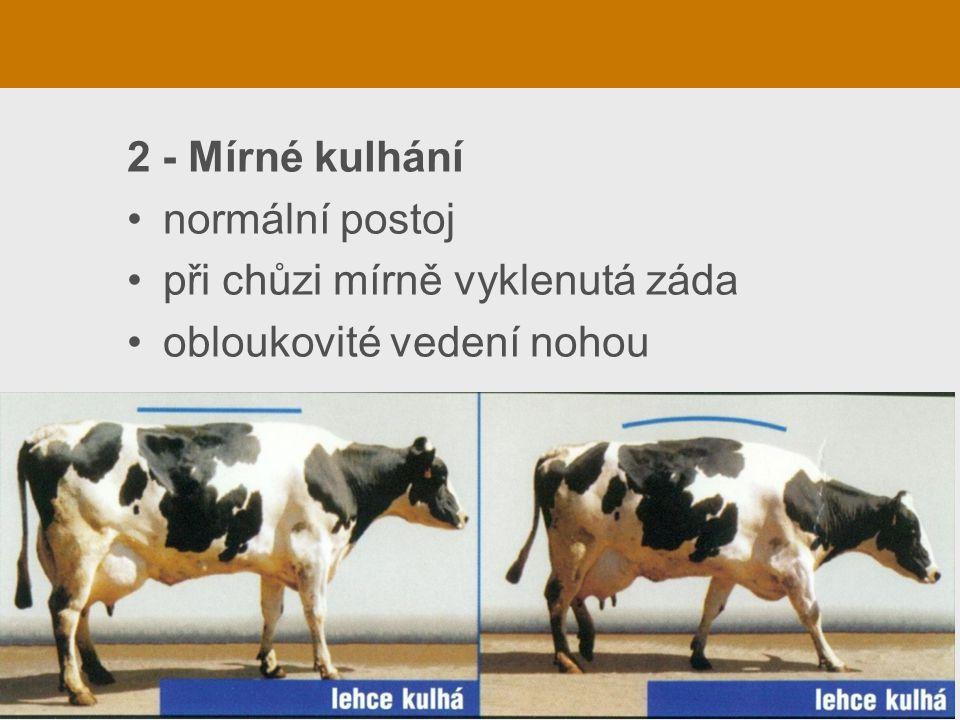 2 - Mírné kulhání normální postoj při chůzi mírně vyklenutá záda obloukovité vedení nohou